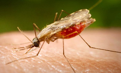 AfDB calls for domestic financing to fight malaria
