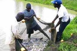 FCT minister threatens to revoke allocations to fish farm allotees