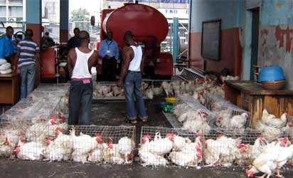 ...Workers at a Poultry Farm