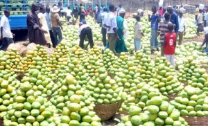Mangoes flood Zuba Fruit Market in Abuja on Friday (13/4/12). There Is Need to Preserve Our Seasonal Fruits. NAN Photo