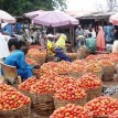 Consumer Watch:  Basket of Tomatoessale for N35,000 – N40,000