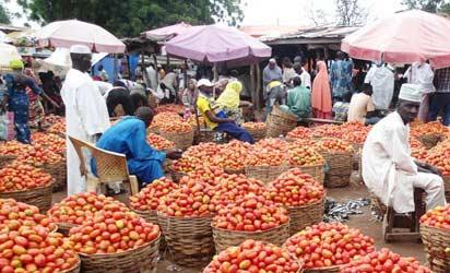 Tomatoes market