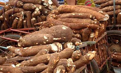 Cassava Tubers