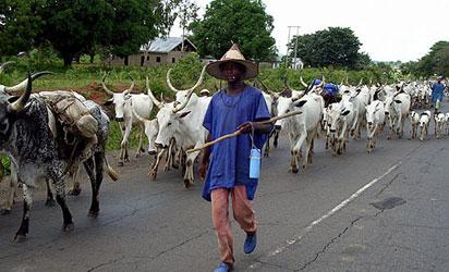 Herdsmen... as death merchants