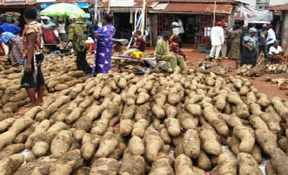 Yam export will not affect local consumption, price, says committee chairman