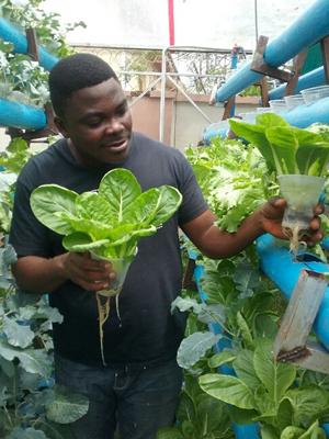 BIC Farms unveils Azolla, hydroponics farming – vanguard