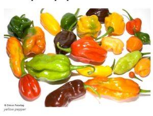 Nsukka yellow pepper