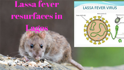 Lassa Fever kills two, others quarantined in Kano