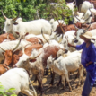 CAN raises concern over sudden influx of herdsmen into Benue