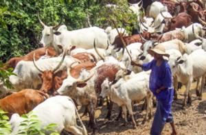 Herdsmen in benue