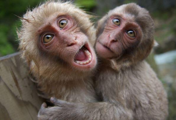 Primate behaviour study