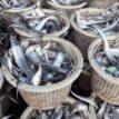 Nigeria has 2.5m metric tonnes of fish deficit — Minister