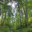 New National Forest Policy 'll preserve ecosystems – Minister