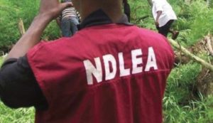 NDLEA seize 9.4 kg exhibits from drug peddlers in Imo