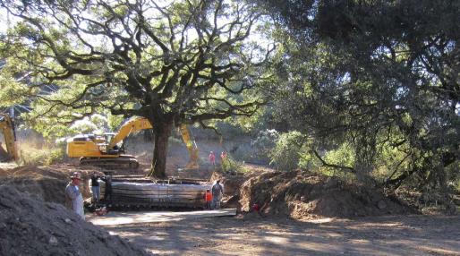 Climate change: Association tasks govt., stakeholders on tree planting