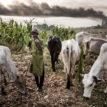 Bayelsa women-farmers decry damage, threat by herders