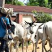Foreign, armed Fulani herders trooping into Oyo — GEN. TOGUN