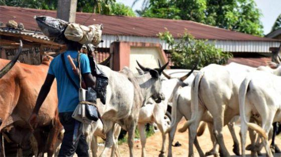 Insecurity: Herdsmen receive military training in Ekiti ― Report