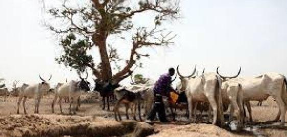 Ethnic, RUGA, Borno