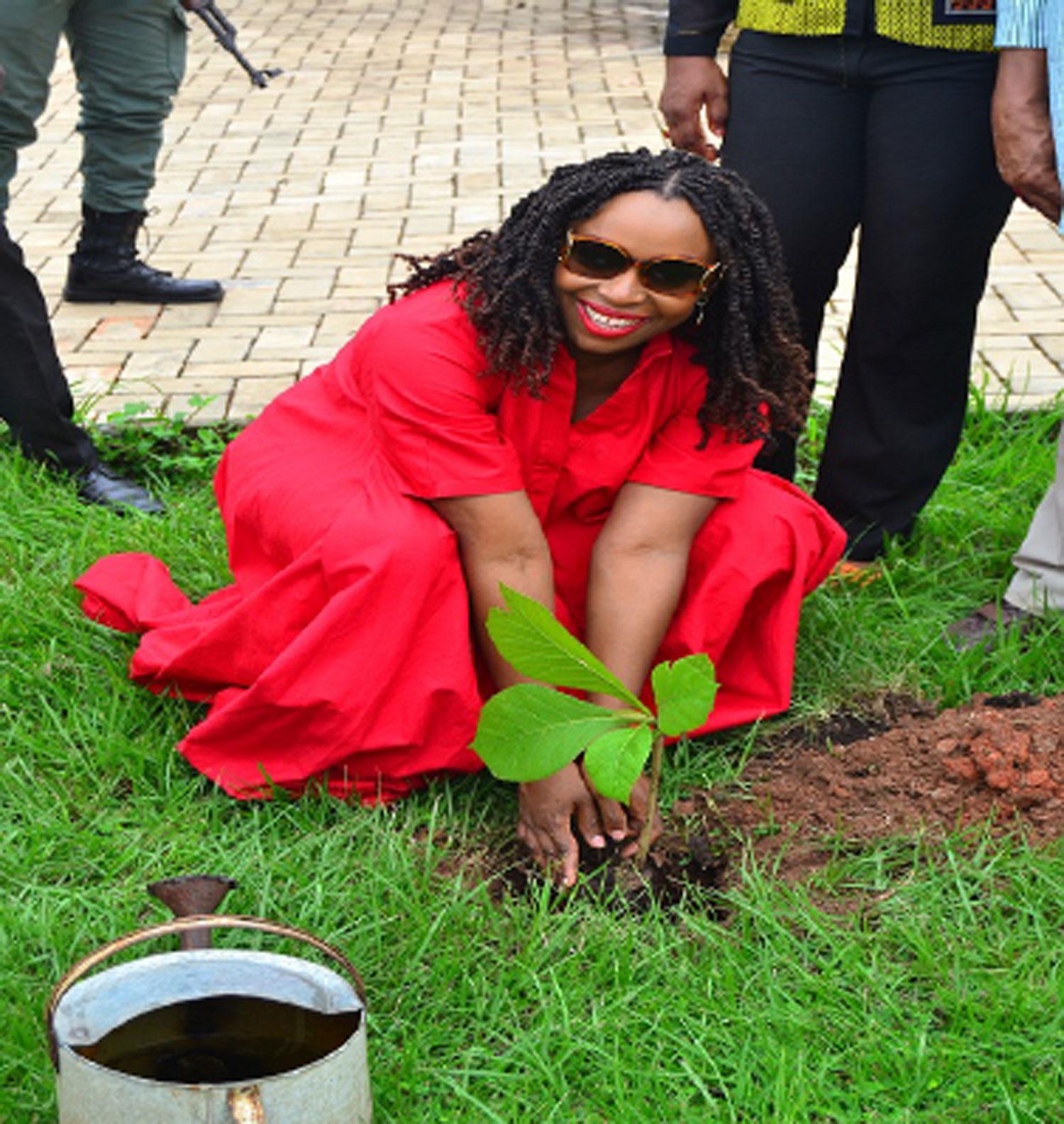 Chimamanda Adichie, plant tree