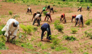 COVID-19 lockdown: Farmers are essential workers ―FG