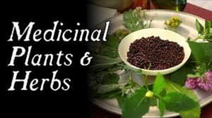 Experts canvass use of herbs, natural foods to tackle COVID-19
