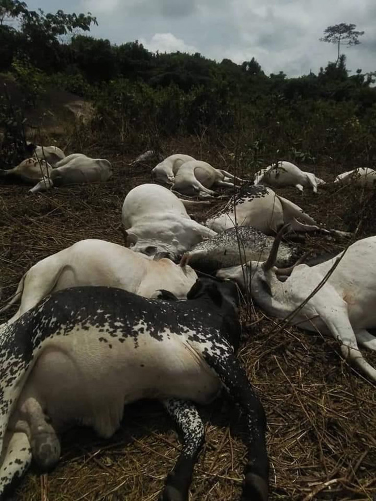 Lightening kills 19 cows in Osun, as Gov. Oyetola sympathizes with Fulani traders