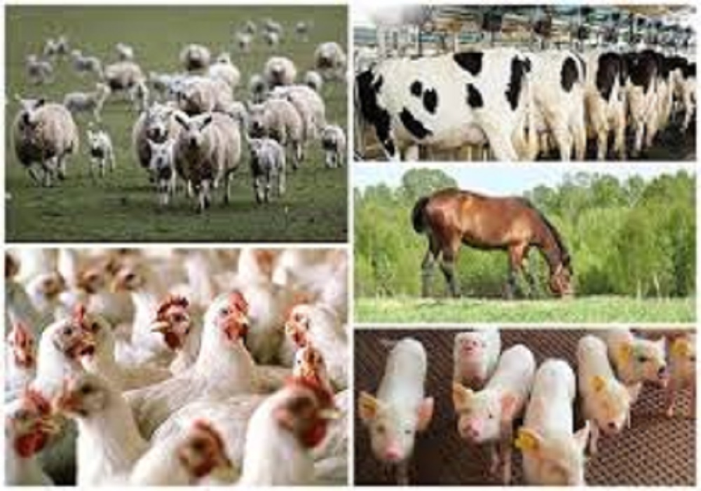 Don urges farmers to use feeds that improve animal reproductive performance
