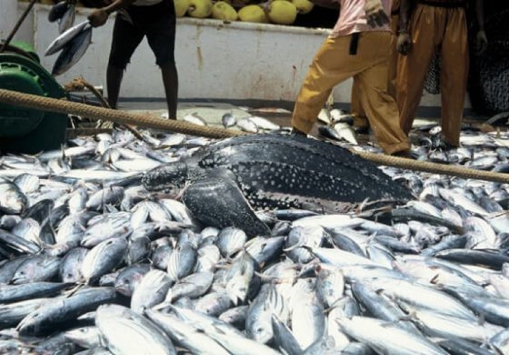 COVID-19: Fish farmers express hope over new frontier in Wuye market