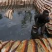 Oil industry pollution threatens fishing, Niger Delta ecosystem — Environmentalist