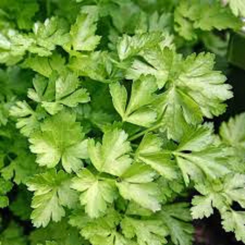 Arthritis, Cancer: Nutritionist harps on efficacy of parsley leaf