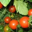 Agriculture: Farmer seeks promotion through self-effort