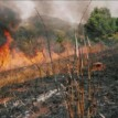 Minister condemns bush burning, urges states to enforce laws