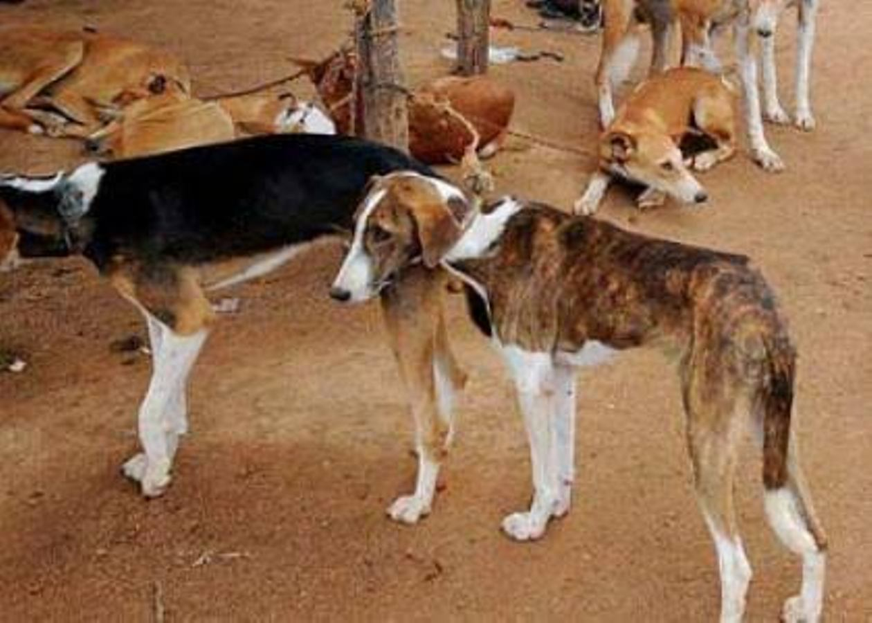 Lagos govt to vaccinate 1.5m dogs against rabies