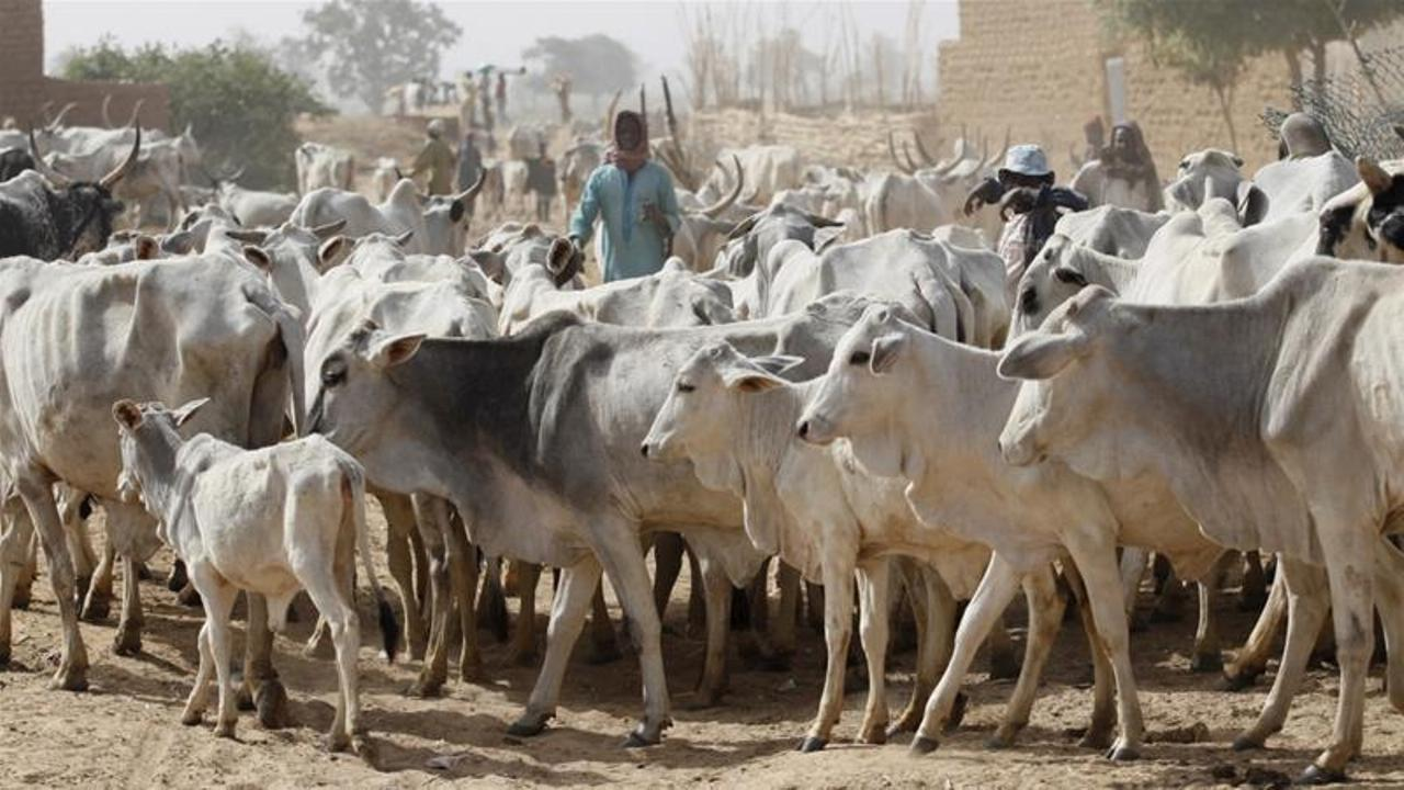 Nigeria's herder-farmer conflict could escalate if NLTP fails - ICG
