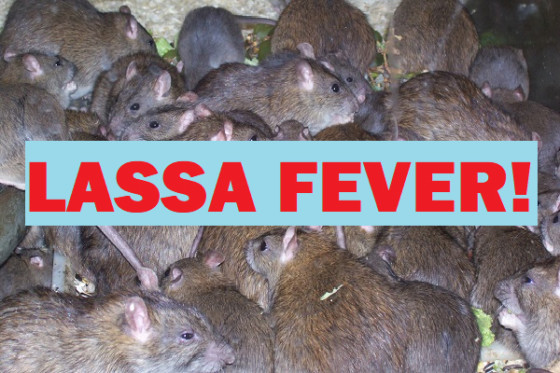Lassa fever: 50 placed under watch in Rivers as one dies
