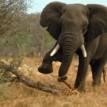 Australian tourist killed by elephant in Namibia