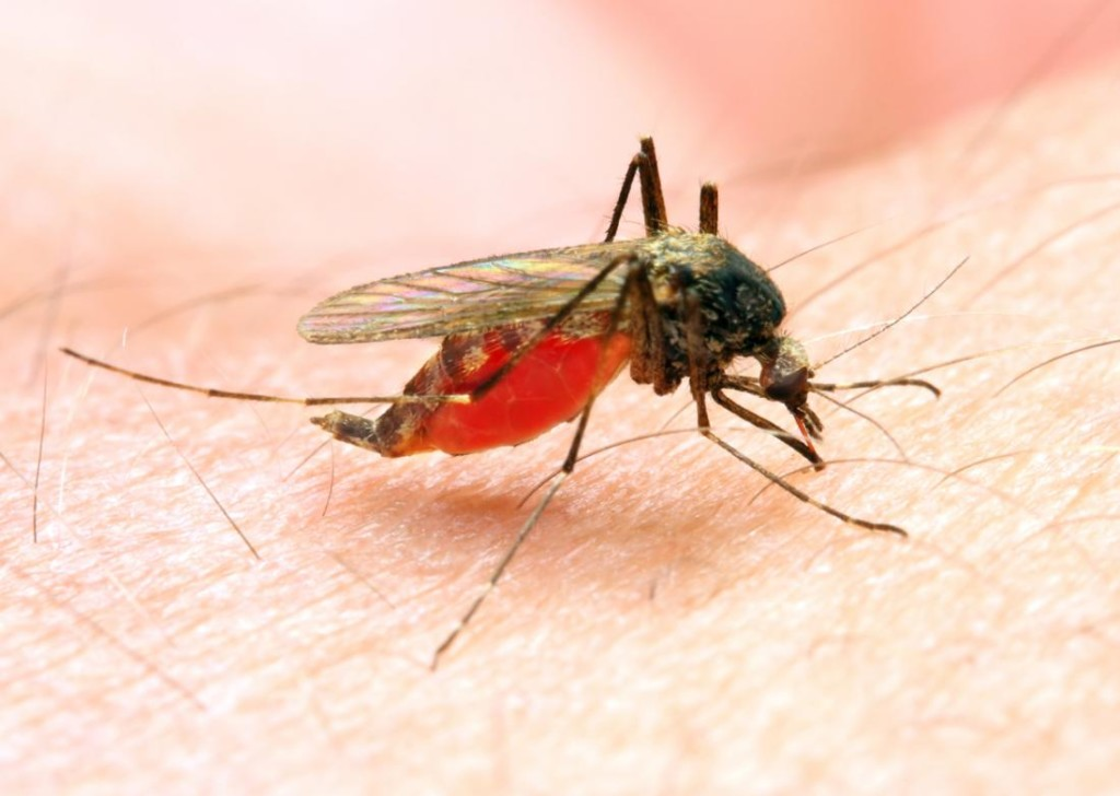 Give more funding to malaria-like COVID, experts tell FG