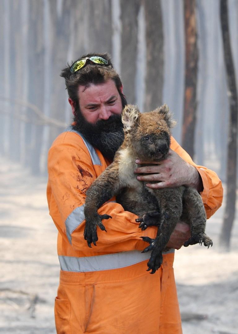 More than one billion animals die in Australia's wildfires