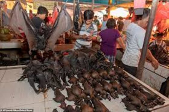 Indonesia city bans sales of bats, snakes