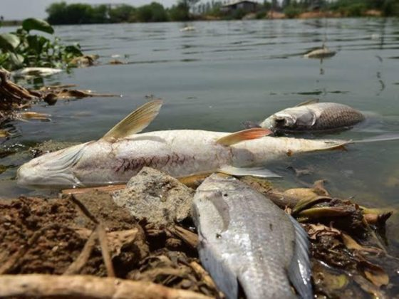 SPDC wrecks havoc to fish rearing in Delta-Youths lament