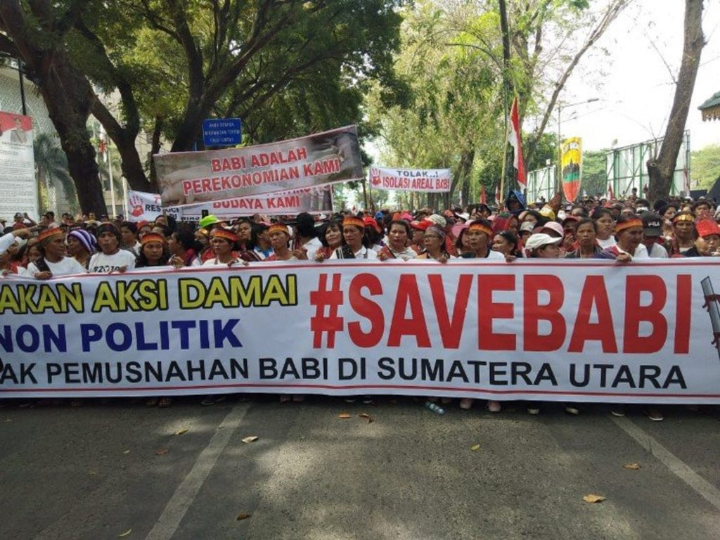 Thousands protest against elimination of pigs in Indonesia