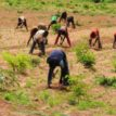 Insured farmers 'll receive payment of claims — NAIC
