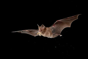 Much maligned elsewhere, bats get star treatment in central France