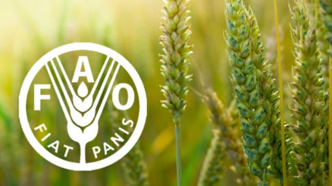 "The Food and Agriculture Organisation of the United Nations (FAO) on Monday says Nigeria has expressed its interest to join the Hand- in-Hand initiative to accelerate agricultural transformation and sustainable rural development. Mr David Tsokar, FAO National Communication Officer, made this known in a statement in Abuja. The statement said that the country was ready to join the other 20 countries currently involved in this new initiative. ""There are incidents of floods in most parts of the country, where much of the food is produced, like we have in Kebbi state; we have also seen growing conflicts over land resources; "" Yet many farmers still face challenges related to market access and these affect farming and food production. According to the statement, the Hand-in-Hand initiative was launched in 2019 by FAO's Director General, Qu Dongyu, to support evidence-based, country-led and country-owned investments for eradicating poverty and ending hunger and all forms of malnutrition. ""The initiative will help countries to develop independent investment plans to close food gaps, end malnutrition, support economic development and reduce environmental impacts with concrete evidence. All of which will lead to the attainment of the Sustainable Development Goals particularly goals number one and two on poverty eradication and ending hunger,"" The statement said that through the initiative, FAO would bring its technical expertise in all ares of its mandate, with emphasis on innovation and digital technologies. FAO, however, assured commitment to support the country's development through the initiative, innovation digitalisation of agriculture and called for a quick ratification and domestication of pending international legal instruments. According to the statement, the minister of Agriculture, Alhaji Sabo Nanono said the initiative was a good one and timely for the country to ensure food security and nutrition to all Nigerians. "" Despite the plethora of challenges that have threatened food security in the country, the current administration is focused on empowering the rural people through modern food and agricultural systems that emphasize a value chain approach to feed its people and create jobs,"" he pointed out. The statement said that the minister directed that a letter expressing Nigeria's interest to participate in the initiative be drafted immediately. He also nominated a focal point from the Ministry, to liaise with the FAO team and other Government experts from the National Bureau of Statistics (NBS) in assembling required data for analysis."
