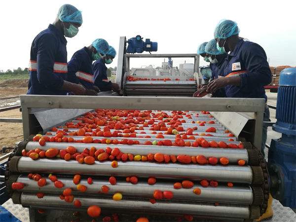 GBfoods completes N20 Billion Tomato processing factory in Kebbi