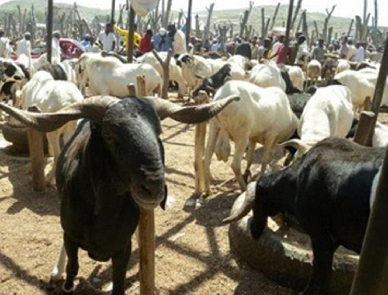 Eid-el-Kabir: Veterinarian warns against burning of ram with tyres, causes cancer