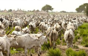 Police arrest immigration officer, 5 others with 164 allegedly stolen cows