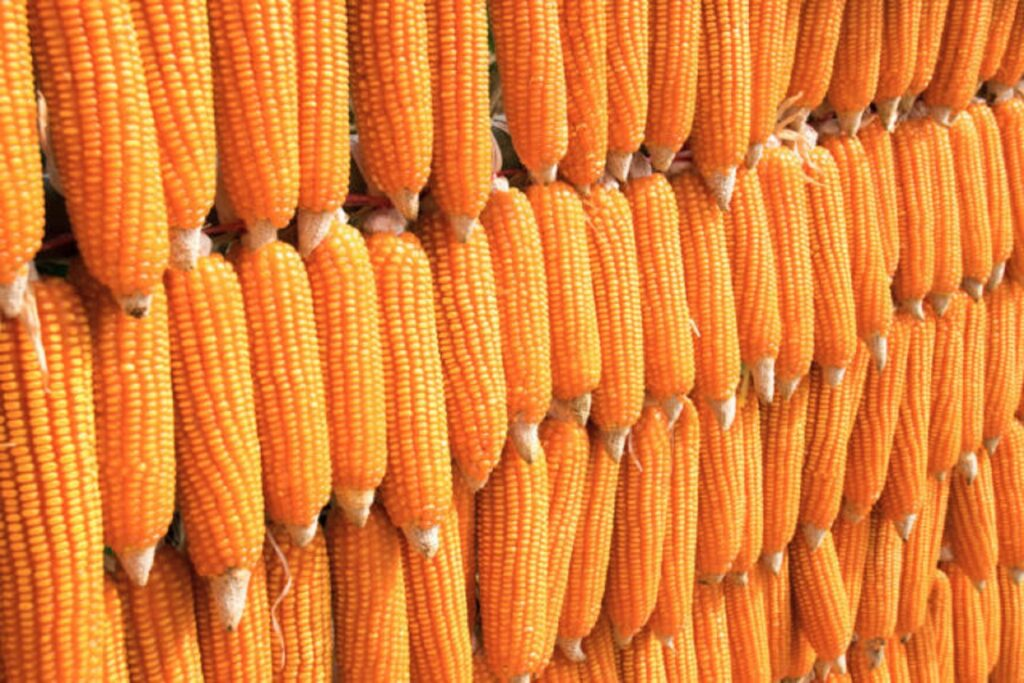 MAIZE IMPORTS: Stakeholders appraise logistics, turnaround time