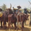 Bandits kill two Miyetti Allah cattle breeders' leaders in Nasarawa